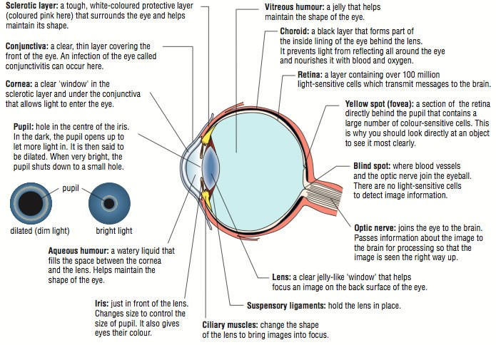 eye diagram.jpg